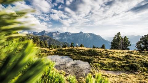 Swiss stone pine forest at Hochzeiger