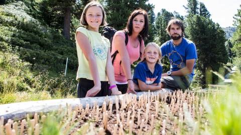 Zirbelnüsse pflanzen im ZirbenPark Hochzeiger