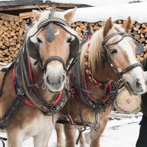 horse-drawn carriage ride in Pitztal